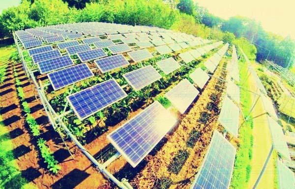 光伏农业:光伏应用新机遇? 2012年对于中节能太阳能科技有限公司来说极其忙碌。 2012年12月18日,中节能太阳能科技有限公司与山东省即墨市政府、青岛昌盛日电太阳能科技有限公司签订关于太阳能小镇战略合作协议,将在青岛即墨市建设一座低碳、绿色、宜居的太阳能示范小镇,项目一期投资7亿元。 这是继中节能太阳能科技有限公司和青岛昌盛日电太阳能科技有限公司成立青岛华盛绿能农业科技有限公司,共建光伏农业科技大棚示范基地后,又一光伏新能源与现代农业的结合。 光伏大棚:光伏与农业的天作之合 谈及太阳能光伏日益渗入普